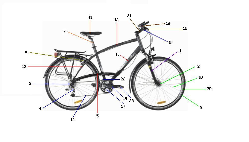 Preguntas Para La Conducción De Grupos En Bicicleta Educación Física Plus Ef