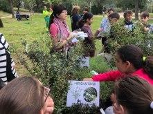 7.9. Reforestación especies autóctonas.Educación ambiental